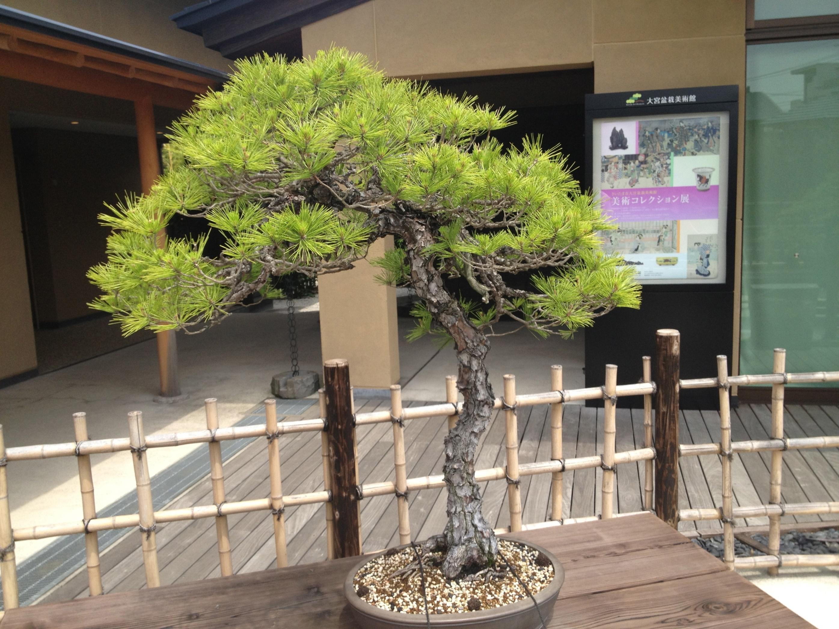 รั้วเตี้ย ๆ น่ารักทำจากไม้ไผ่สไตล์ญี่ปุ่น