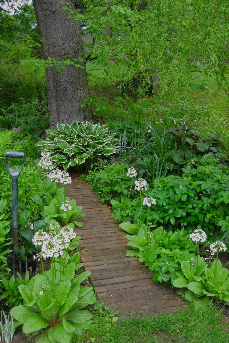 ทางเดินไม้ในสวน
