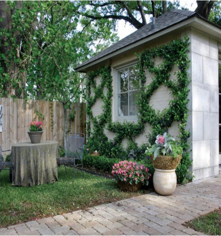 สวนไม้เลื้อยบนผนังบ้าน