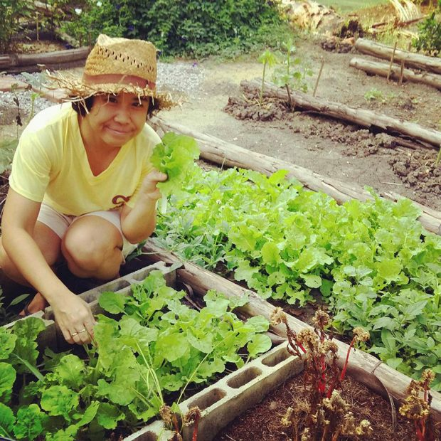 แปลงผักในบ้านที่ปลูกเอง