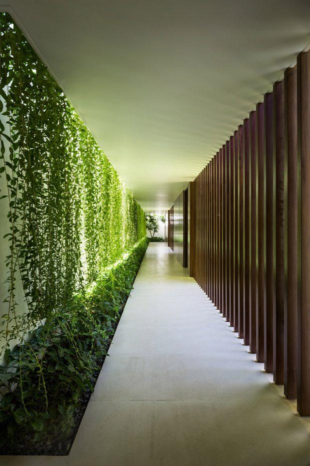 ทางเดินในบ้านอยู่ระหว่างกำแพงต้นไม้กับไม้ระแนง