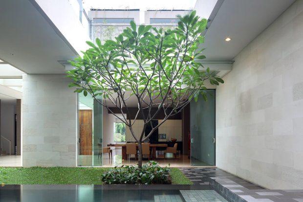 ปลูกต้นไม้ในพื้นที่วางกลางบ้าน