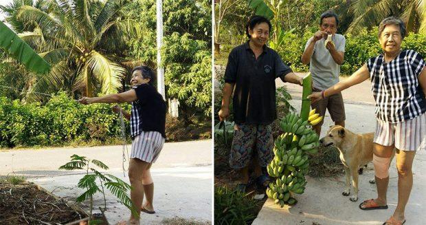 สวนกล้วยบ้านของพ่อกับแม่