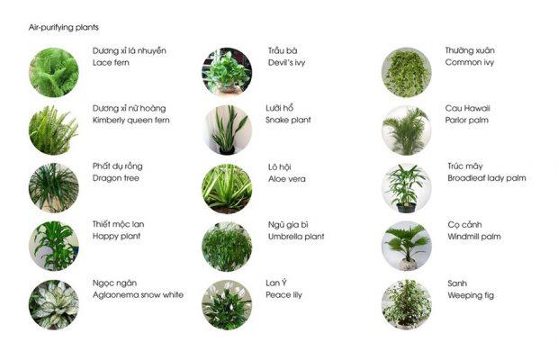 พืชที่มีคุณสมบัติดูดซับมลพิษในอากาศ