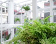 ปลูกต้นไม้ช่วยซับมลพิษในอากาศ