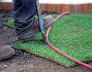 เหยียบแผ่นหญ้าให้แน่น