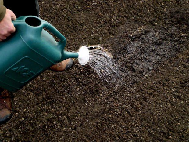 รดน้ำดินให้ชุ่ม