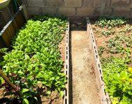 สวนผัก เชียงใหม่