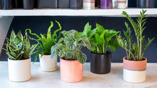 CAM-plants