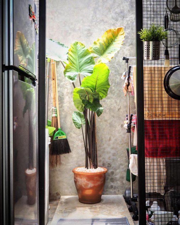 สวนเล็ก ๆ ในครัว