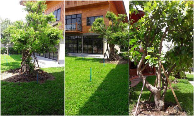 จัดสวนด้วยไม้ล้อม