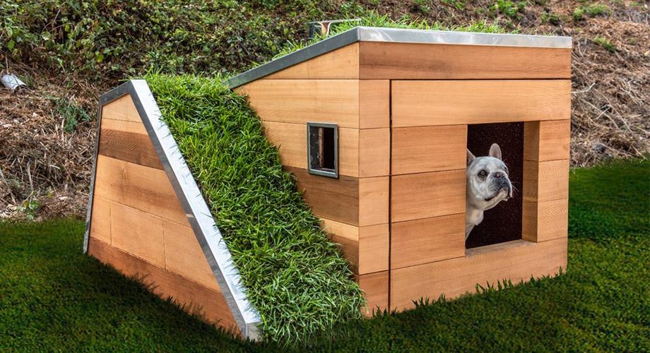 สร้างบ้านสุนัข