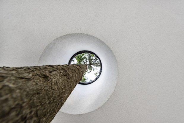 เจาะเพดานให้ต้นไม้โตได้