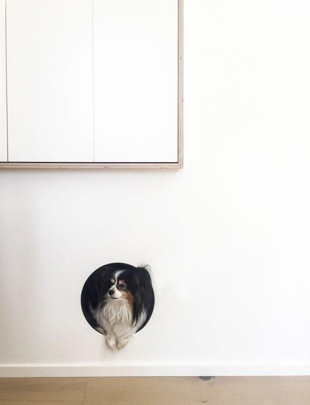 ประตูสำหรับสุนัข