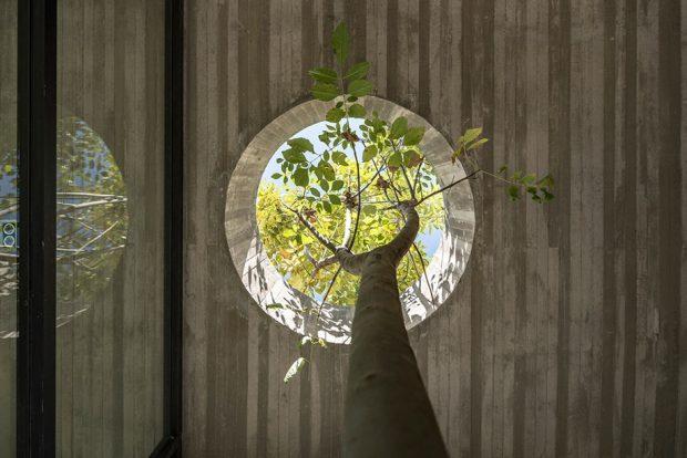 เจาะเพดานให้ต้นไม้เติบโต