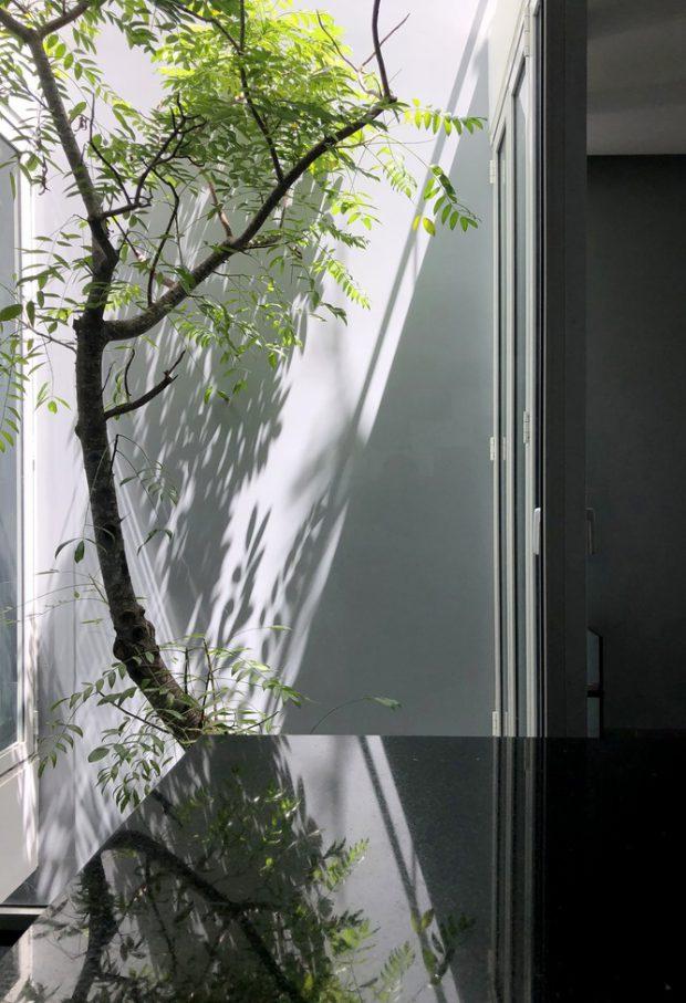ต้นไม้เป็นส่วนหนึ่งของบ้าน