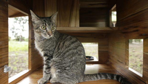 บ้านสำหรับแมวจรจัด