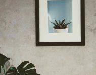 กรอบรูปแลต้นไม้ประดับในบ้าน