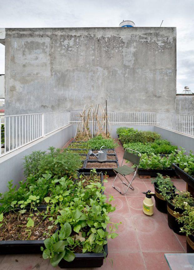 สวนครัวบนดาดฟ้า