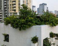 บ้านหายใจได้มีช่องเปิดให้ต้นไม้โต