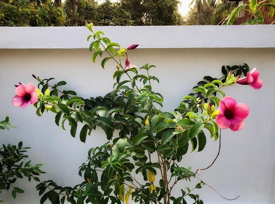ปลูกดอกไม้ในบ้าน