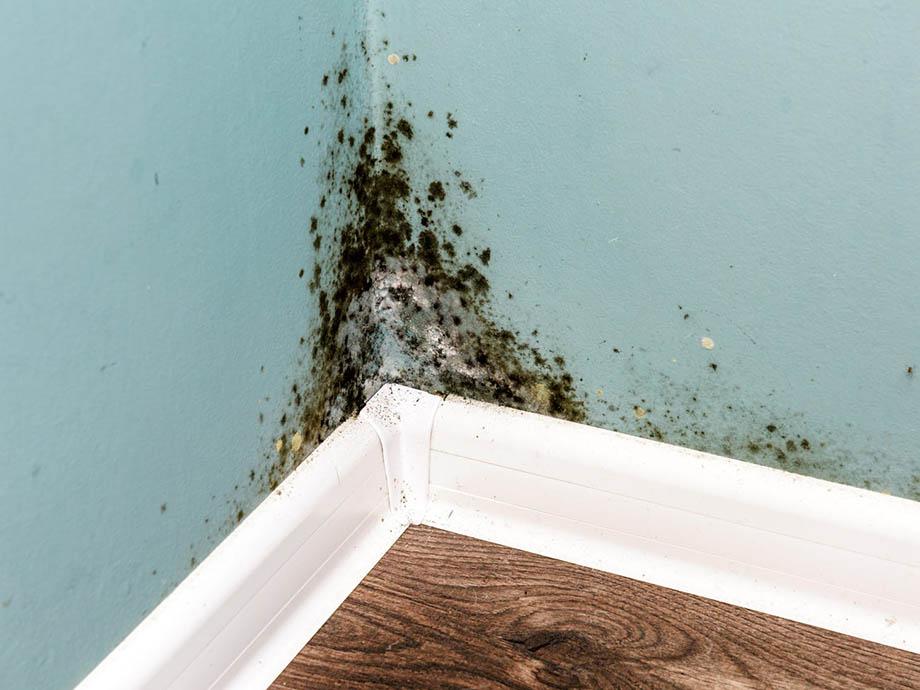 ปัญหาบ้านชื้น
