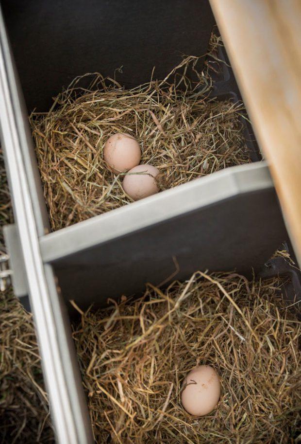 รางฟักไข่