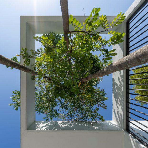 ช่องว่างเปิดออกให้ต้นไม้เติบโต