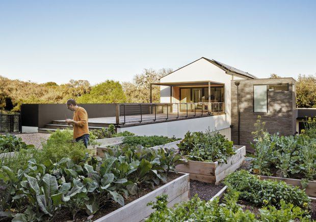 สวนผักในบ้าน