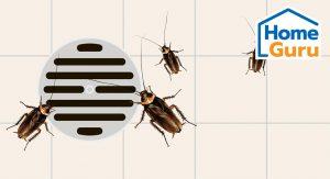 วิธีจำกัดแมลงสาบ