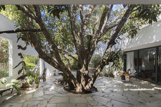 ต้นไม้ใหญ่ในบริเวณบ้าน